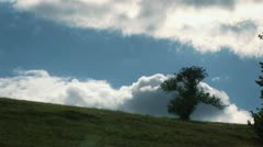Lonely Tree On The Hill with Cloudy Sky Stock Footage
