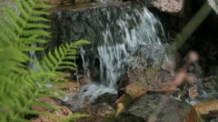 Small Waterfall With Ferns Scotland HD  Stock Footage