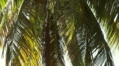 Palm Tree Closeup - stock footage