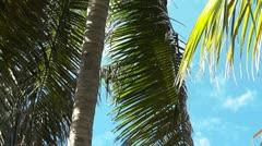 Palm Tree Closeup Stock Footage
