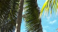 Stock Video Footage of Palm Tree Closeup 2