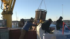 Icy Dock - Dumping the Halibut Bailer into Bins Stock Footage