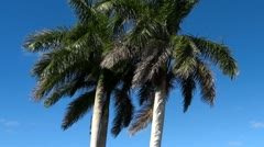 Palm Trees Panning Up - stock footage