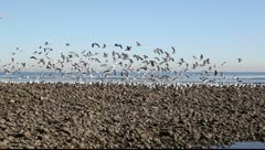 Group of sea birds have soared Stock Footage