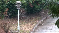Lamppost, rainy day Stock Footage