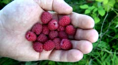 Raspberry in a hand of the person, large and average plans, zoom in Stock Footage