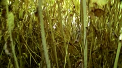 Campaign through a bush thicket, impassable and prickly thickets Stock Footage