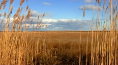 Nauset Marsh; 2 - stock footage