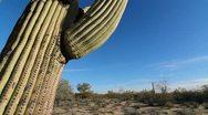 Beautiful Saguaro Cactus Crane Shot Stock Footage