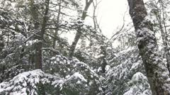 Looking up at snow covered trees Stock Footage
