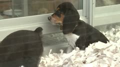 Puppies in a pet store (3 of 4) Stock Footage