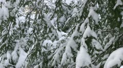 Snow covered pine trees in forest Stock Footage