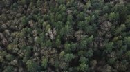 Stock Video Footage of Panning Over Mountain Trees From Above