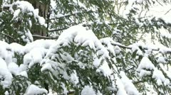 Trees in forest covered with winter snow Stock Footage