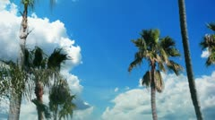 Stock Video Footage of Palm Trees and Blue Skies Timelapse 1