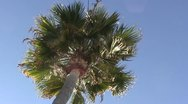 LA-0095 PALM TREE AND SOLAR FLARE Stock Footage