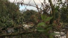 Train seen through bush Stock Footage