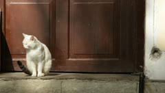 white cat - stock footage