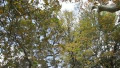 Stock Video Footage of autumn trees