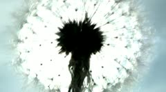 The dandelion shivers from a wind, shines from the sun - stock footage