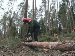 Worker with a chainsaw cleanning fallen trees in forest after storm. Stock Footage