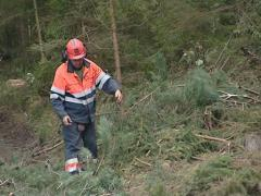 Worker with uniform cleaning forest after storm. Stock Footage