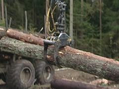 Special cargo crane unload logs from truck. Forest fell. Stock Footage