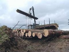 Cargo truck with crane unload logs from trailer. Forest fell. Stock Footage