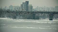 Kyiv Birds slowmotion Stock Footage