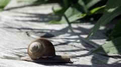 T/L, Lockdown, A snail moving outdoors Stock Footage