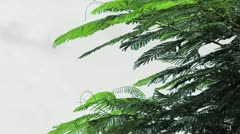 Tree And Wind Stock Footage