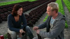TD, MS, man and woman drinking beer at end of lettuce rows on an organic farm Stock Footage