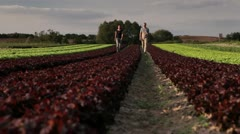 TU, WS Front View, man and woman walking amongst rows of lettuce on an organic Stock Footage