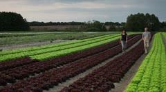 WS, TD, CU, R/F man and woman walking down rows of lettuce on an organic farm Stock Footage
