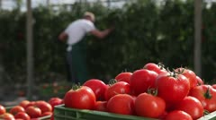 CU, crate of organic tomatoes while a man works in the background Stock Footage