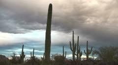 Dramatic Arizona Cactus Silhouette Time Lapse Stock Footage