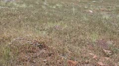 grass weeds blowing in the wind. - stock footage