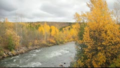 View of Stream from Road Stock Footage