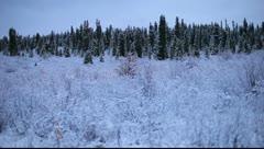 Snowy Wilderness Stock Footage