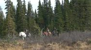 Riding Horses in Northern BC Stock Footage