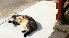 Happy Cat Sunshine Rolls Stock Footage