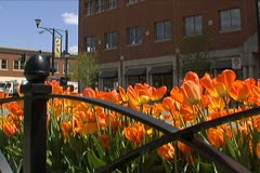 Flower Bed in Downtown - stock footage