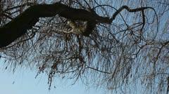 Tree limb over lake Stock Footage