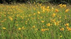Irish Wild Flowers GFHD Stock Footage