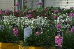 Purple Flowers - stock footage