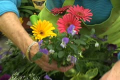 Putting Flower in Pot - stock footage