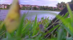Neighborhood Lake Stock Footage
