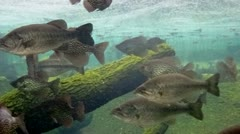 School of fish swimming in lake underwater Stock Footage