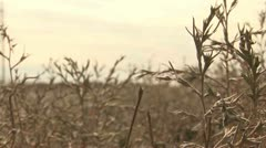 Countryside - Kazakhstan Stock Footage