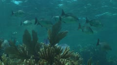 School of fish on healthy reef 02 Stock Footage